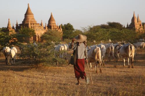 Bagan 3236
